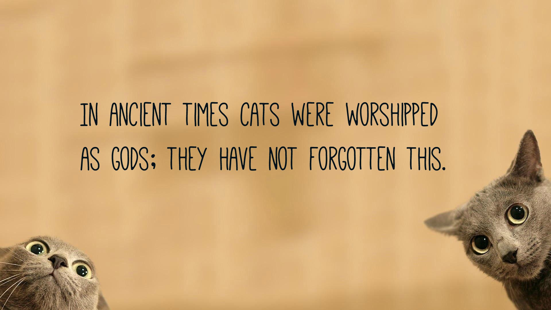 Cat Quotes | Text & Image Quotes | QuoteReel