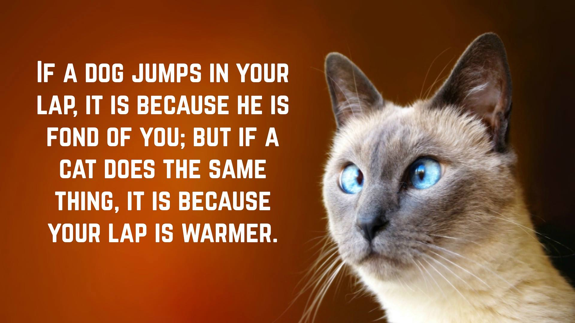 Funny Cat Quotes