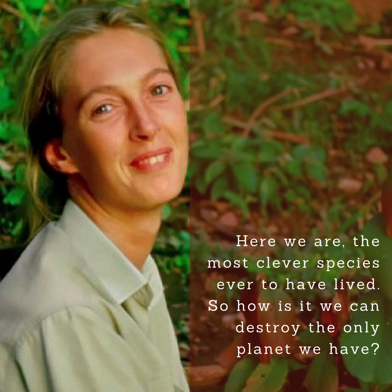 Jane Goodall Quotes: Text & Image Quotes